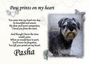 Pet Memorial Paw Prints on My Heart Your Photo Dog Cat Pet Loss Sympathy