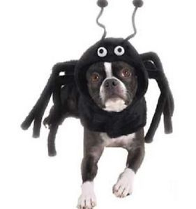 Size Medium Begood Black Spider Paws Dog Halloween Costume