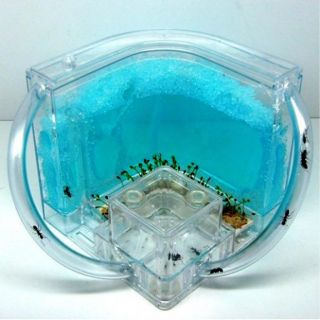 New 3D Ant Maze Advanced Nursery Farm Blue Gel Live Habitat with Feeding System