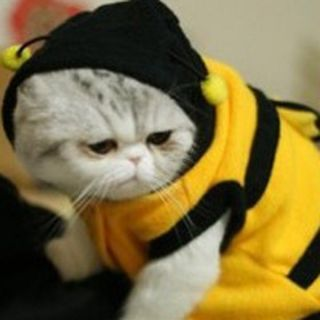 Cute Cat Dog Canine Halloween Costume Clothes Pet Apparel Bumble Bee Dress Up