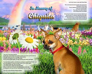 Rainbow Bridge Customized Pet Memorial Picture Tribute for Chihuahua Dog