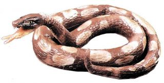 Python Coiled Latex Foam Fill Prop Accessories Snake Charmer Magician Halloween
