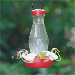 Perky Pet Hummingbird Funnel Fill Glass Bird Feeder   16 oz.   Bird Feeders